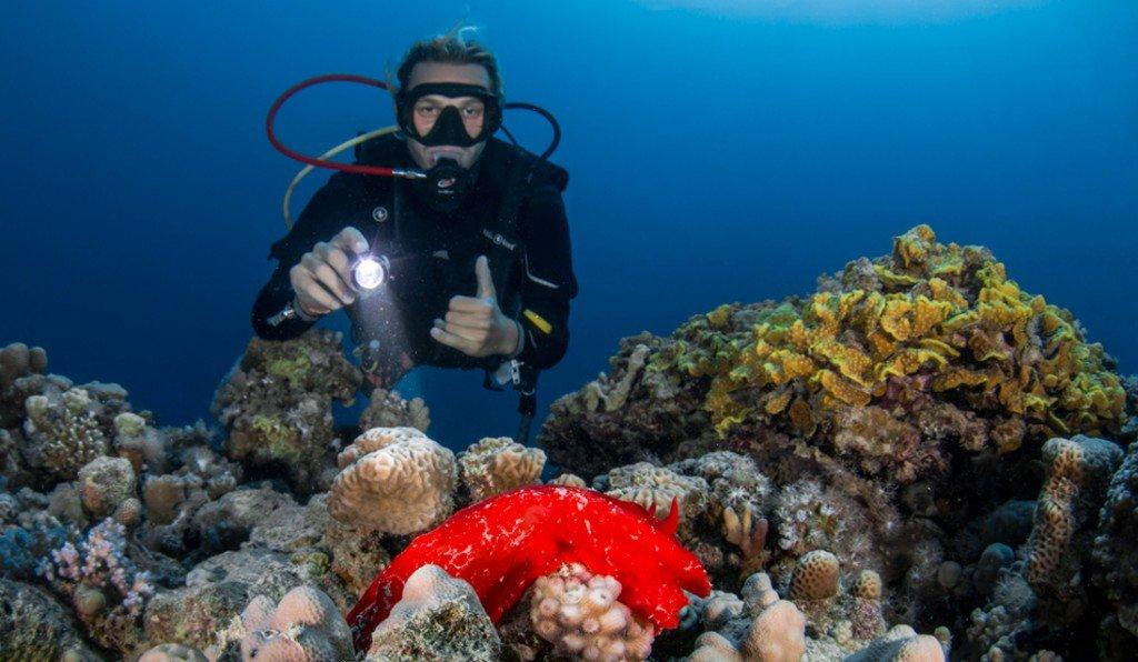 Makadi-Diving-02